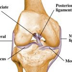 Knee Ligaments – Why Do They Matter?
